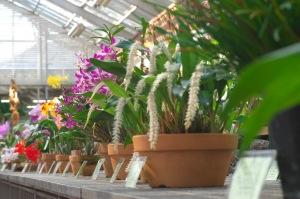 植物公園のラン展