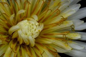 野の花マクロ