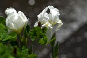 石内の花とか