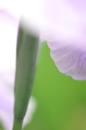 久しぶりに花など