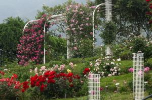 植物公園・花だより
