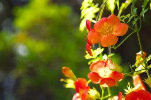 """夏の花&""""いずも"""""""