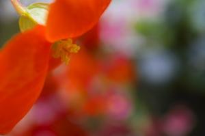 続・Flower