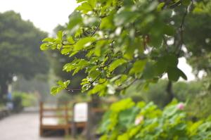 続・雨の植物公園