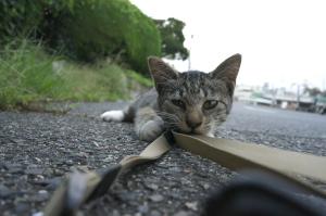 野良猫と戯れて