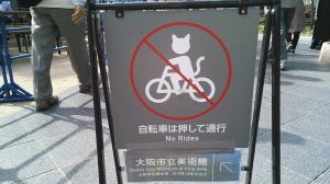 猫のいただきもの