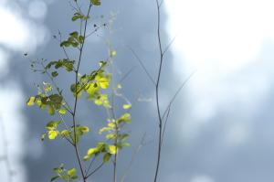 香木の森公園・花