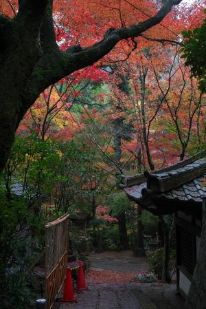 紅葉・三滝寺