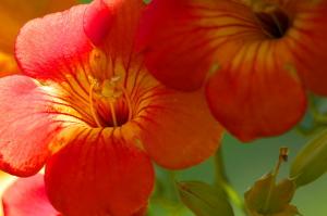 今年の花々