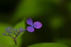 今年の花々02
