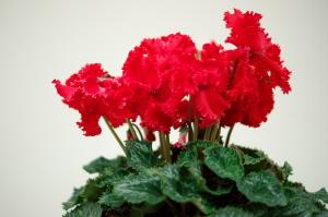 今年の花々S03