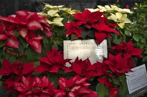 2016 クリスマスを飾るフラワー展