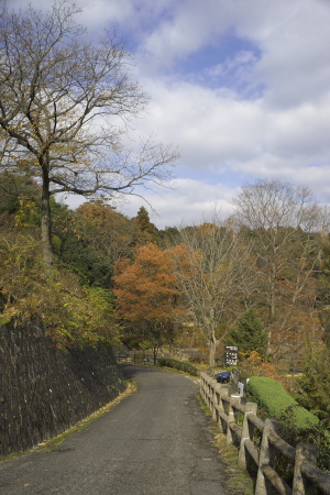続・師走の植物公園