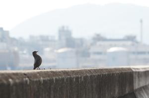 大竹の湾岸風景