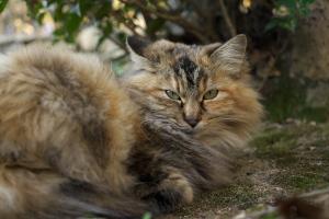 尾道の猫たち