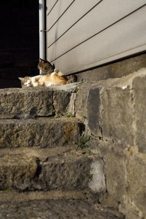 続・尾道の猫