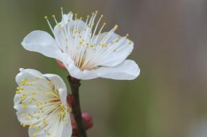 年明けの花々