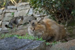 おのみち野良猫