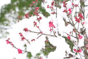 あの雪の日に