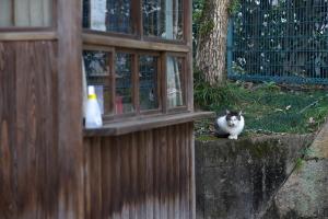 猫Photo