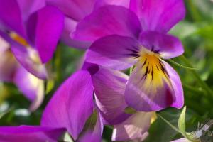 花と新幹線