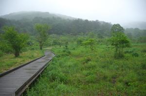 お散歩の霧ケ谷湿原