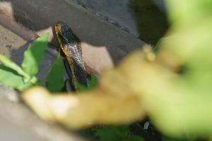 Ryan、爬虫類に遭遇