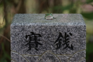 竹林寺のカエル
