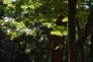 広島県緑化センターへ