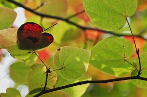 イモリと紅葉