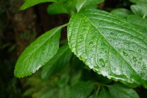 雨の三瀧寺