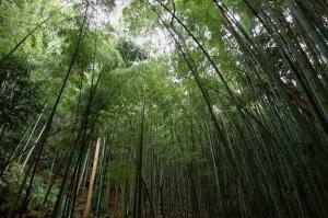 三瀧寺・雨の参道