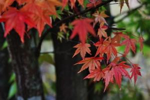 三原市・御調八幡宮の秋色