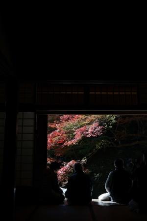 続・吉水園紅葉
