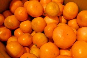 ふぞろいの蜜柑たち