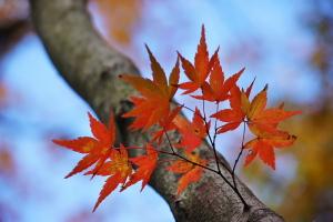 秋の彩り2