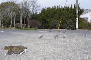 井口漁港の猫