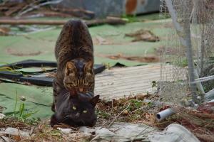 島の猫とメジロ