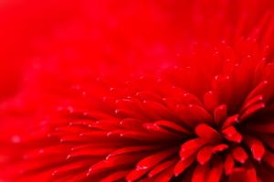 2013-Flowers