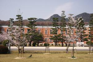 桜と「赤レンガ」