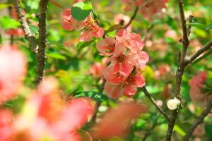 湧永庭園の花
