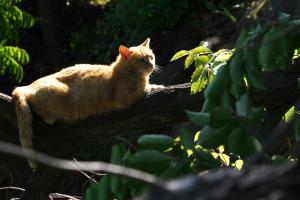 木の上の猫