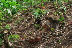 吉水園の野猿一家