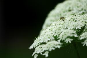 八幡の植物