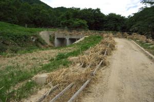 弥栄湖上流の栗園へ