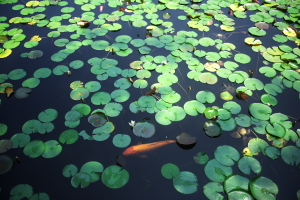 極楽寺蛇の池