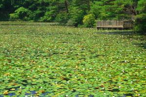蛇の池の亀