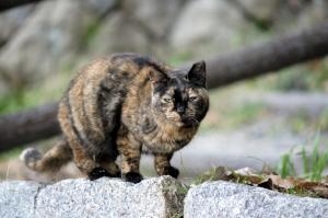 野良VS家猫