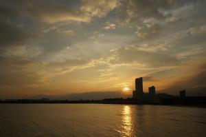 夕陽と野良
