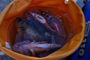 釣り場新発見